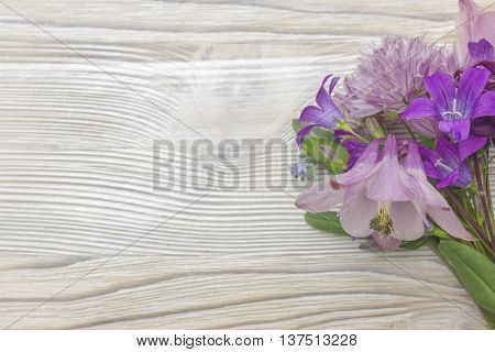 Violet pink magenta Campanula flowers on white wooden background border made of violet flowers on white backdrop. Top view