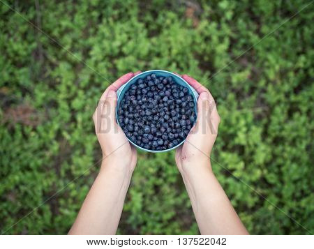 Bilberries in a bowl held by a woman