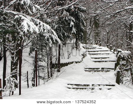 Stairs in a pine forrest covered with snow