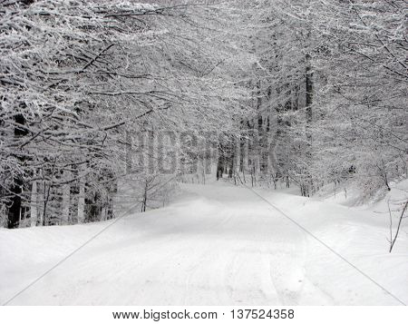 Snowy road through the winter forrest with sled tracks on the road