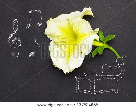 Creative photo of a flower and illustrated gramophone with notes on black background.