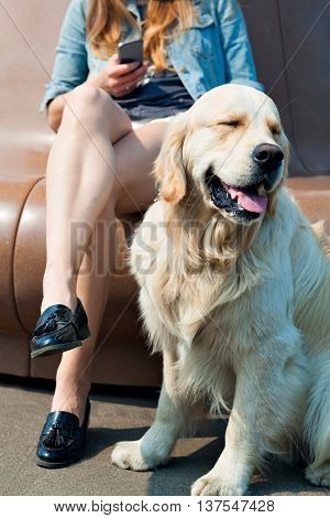 Portrait of a young girl with a smartphone in the hands on a park bench, next to her dog outdoors. Human friendship and dogs. Joint pastime. The owner is sitting next to his dog breed golden retriever on a background of summer city.
