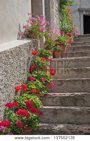 old stone staircase with geranium flowerpots on the steps