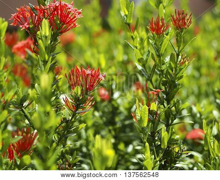 Beautiful Red spike flowers in the garden, select focus