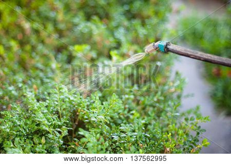 Treatment Of Backyard By Pesticide Against Pests