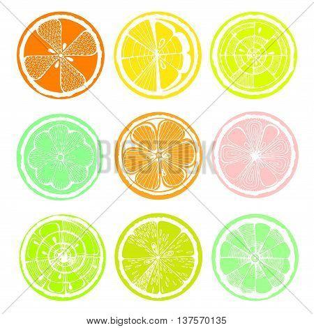 Lemon orange and grapefruit on white background. Hand-drawn citrus. Stylized graphics.