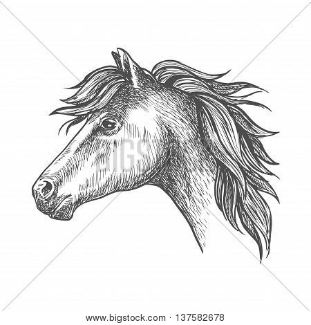 Profile of heavy farm horse isolated sketch icon of clydesdale mare with short mane and strong neck. Use as organic farming theme, horseback riding tour and family outdoor activity design