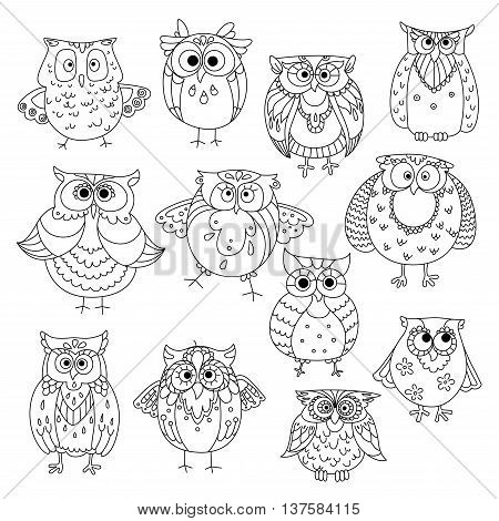 Decorative sketches of cute owls with young owlets, wise horned owls and funny barn owls, adorned by fluffy feather patterns, wavy lines and flowers. May be use as t-shirt print or wisdom symbol design