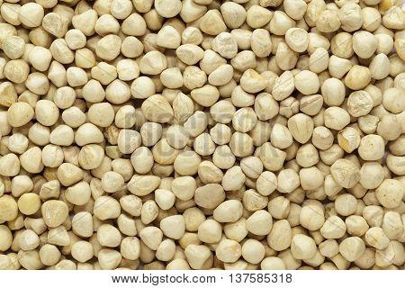 Organic kernel of Moringa (Moringa oleifera) seeds. Macro close up background texture. Top view.