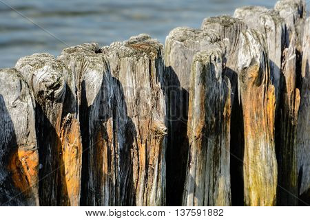 Close up from a Wodden groyne in northern germany