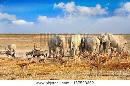 Herd of Elephants around a busy waterhole with with Gemsbok Oryx and Impala against a bright blue cloudy sky