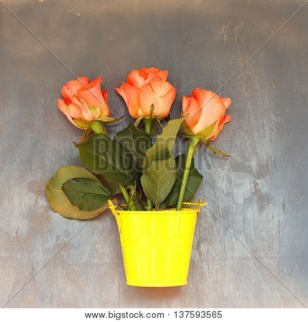 3 red roses in a little yellow pail on blue wooden background