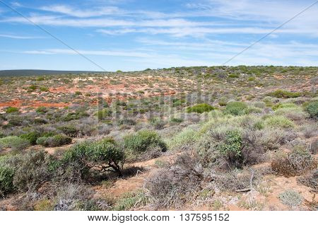 Coastal bushland at Red Bluff in Kalbarri, Western Australia with sandstone rock and native green plants under a blue sky with clouds.
