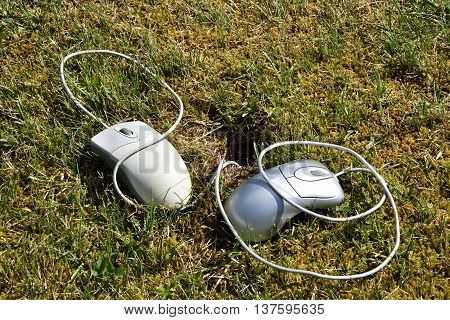 Two computer mouses lying in grass and are plugged in the mouse hole.