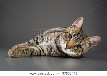 A cute stripped tabby kitten with third eyelid showing (eye disease)