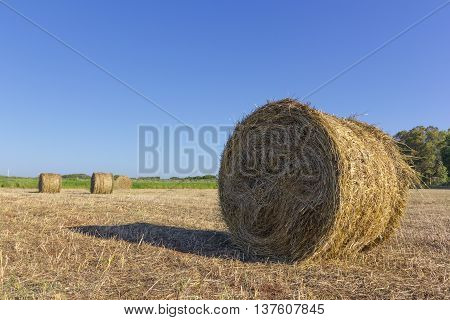 Bale of hay in the Italian countryside