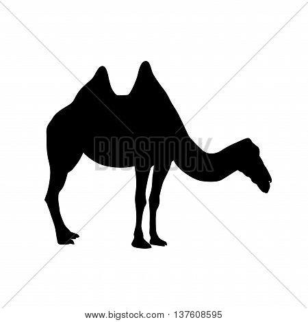 Bactrian Camel Silhouette