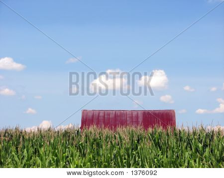 Barn Deep In Corn