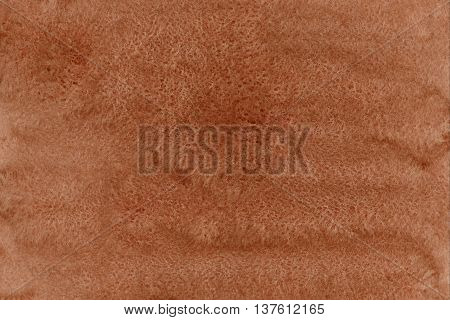 Abstract Brown Watercolor Background