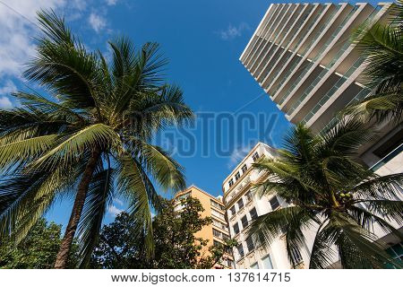 Tall Hotel Building and Palm Trees in Copacabana