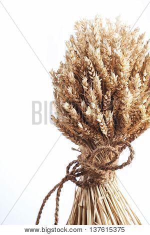 Close Up Of Wheat Tied With String