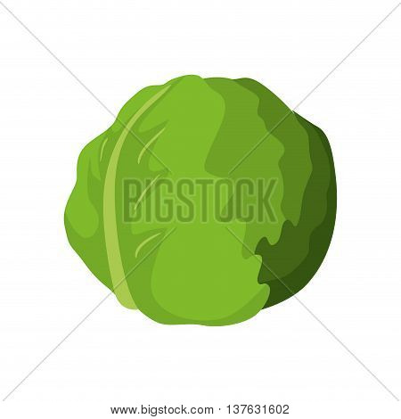Organic and Healthy food concept represented by lettuce icon. Isolated and flat illustration