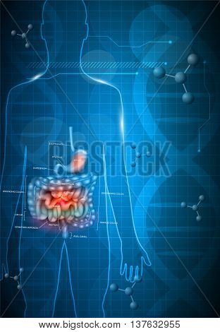 Gastrointestinal Tract Anatomy On A Abstract Dark Blue Scientific Background With Dna Chain