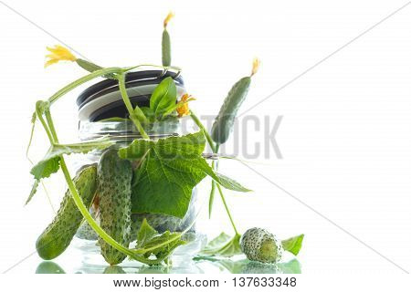 pickled cucumbers with herbs and spices in glass jar