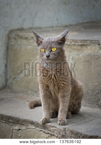 Portrait of grey cat with yellow eyes