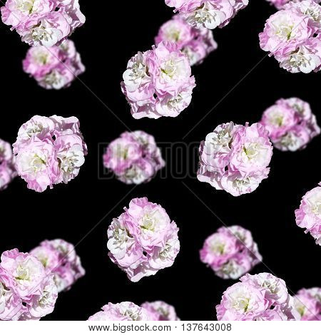 Delicate floral background of lilac inflorescence isolated pelargonium