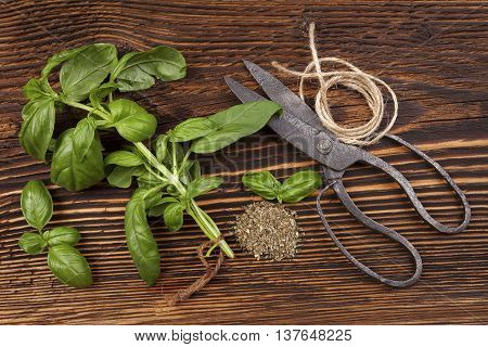 Aromatic culinary herbs basil. Fresh and dry basil herb with vintage scissors on rustic wooden background.