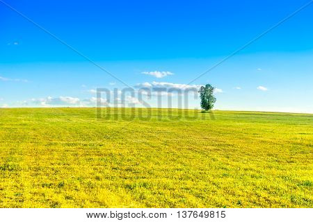 Beautiful meadow and lonely tree in countryside