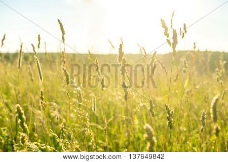 Grass field lit by bright sun in countryside