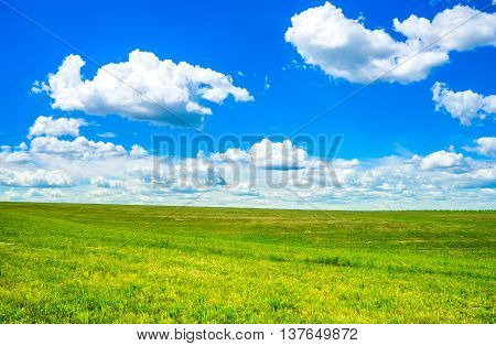 Green field and cloudy sky. Countryside landscape