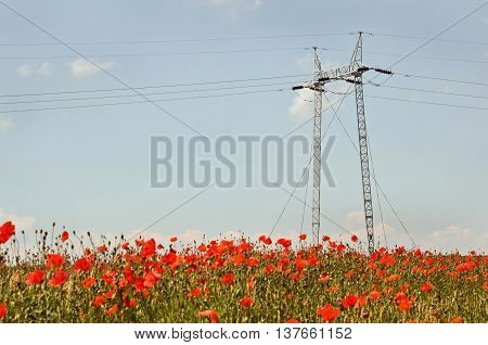 Power distribution, high voltage power pole in wheat field