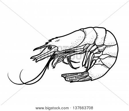 Shrimp Doodle, a hand drawn vector illustration of a shrimp.