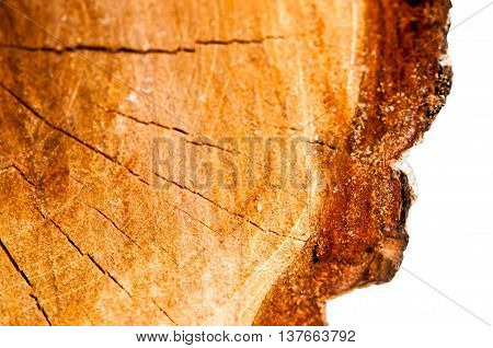 Wood texture of cut tree trunk isolated on white