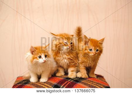Three cute ginger kittens sitting on plaid. Pets. Funny animals.