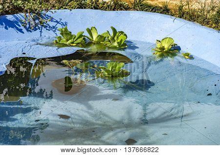 Floater Plants In Water