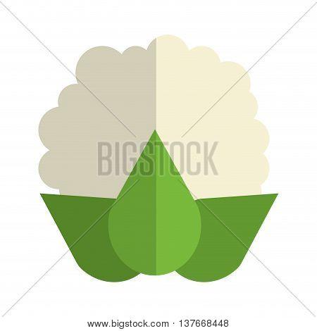 simple flat design whole cauliflower icon vector illustration