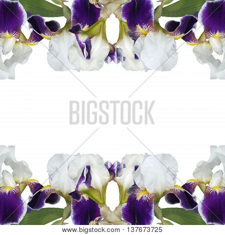 Beautiful floral pattern of the branches of purple iris