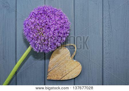 Allium with a wooden heart on a dark background