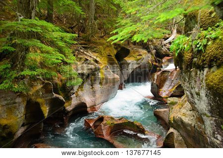 Avalanche Gorge ,glacier National Park ,montana, Usa