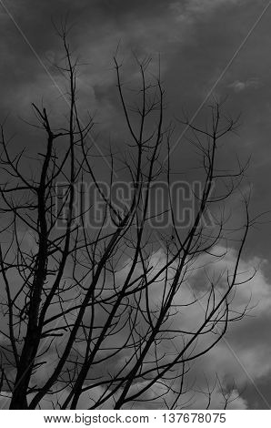 Tree leaves gloomy atmosphere in the midst of a dry evening.