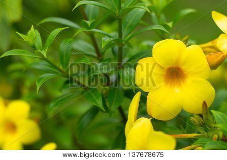 Yellow flower in the park, outdoor getaway.
