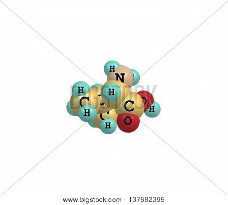 Valine or Val is an amino acid. 3d illustration