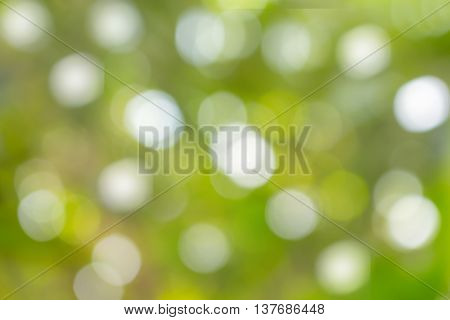 Bokeh, Abstract natural color for background, Fresh green  blurred foliage and bright summer sunlight.