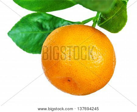 mandarine tree fruit isolated on white background
