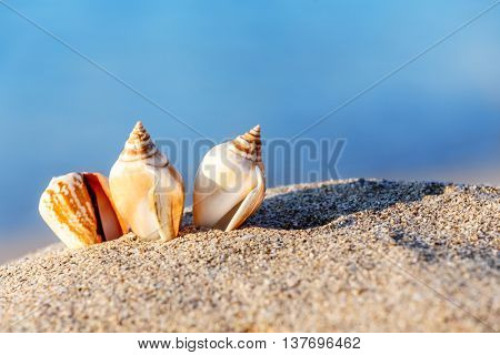sand beach sea shell sunny outdoors seascape