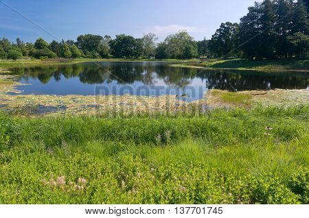 landscape of marshes and lake surrounded by trees of arboretum in lisle illinois